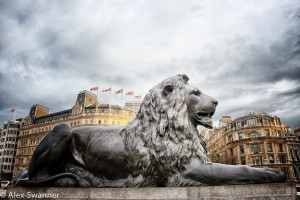 Trafalgar Square Lion desktop HD