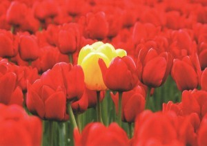 Tulips red and yellow background