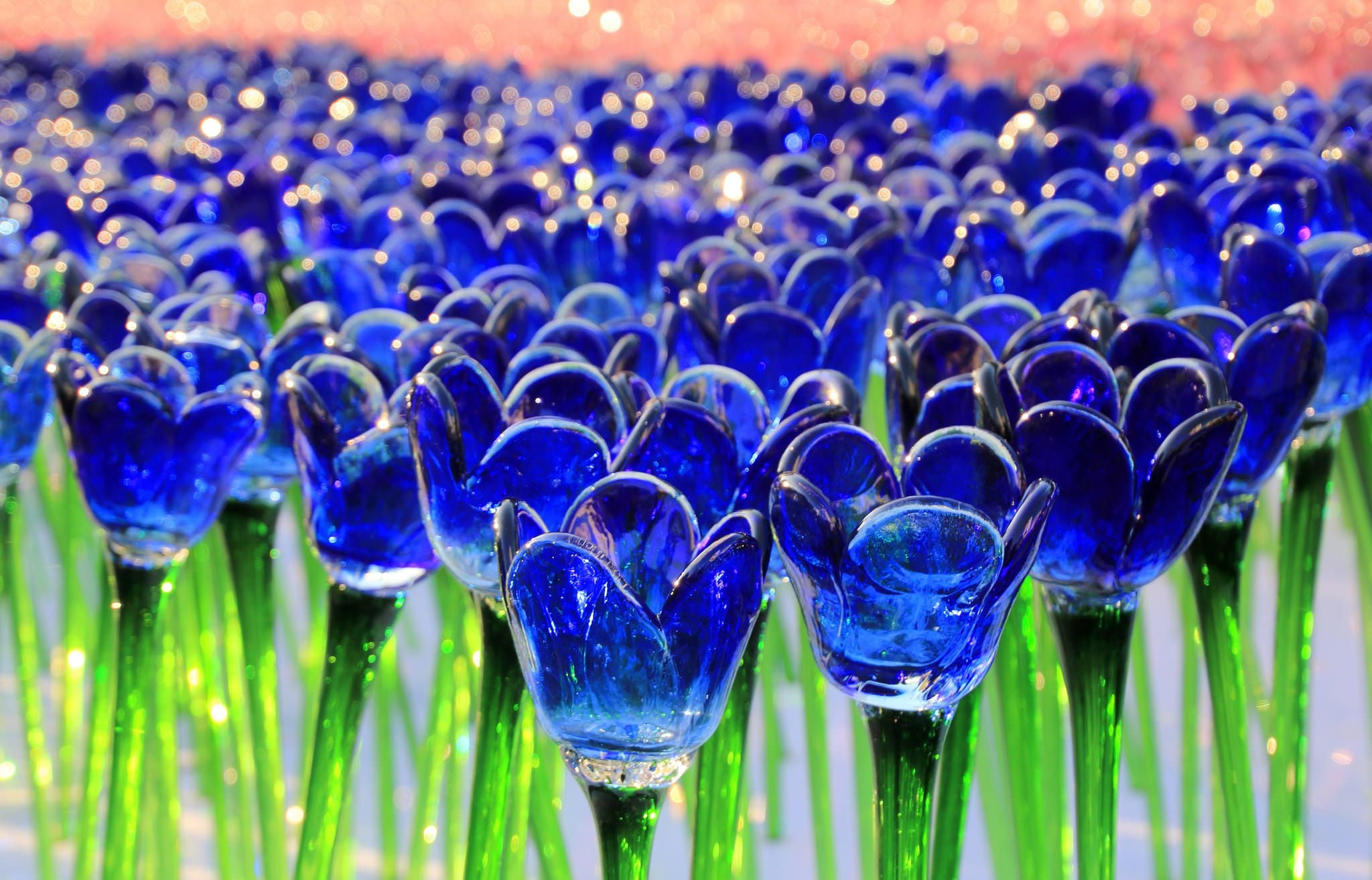 blue glass Tulips HD wallpapers