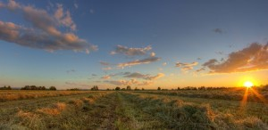 Image of field Rural landscape