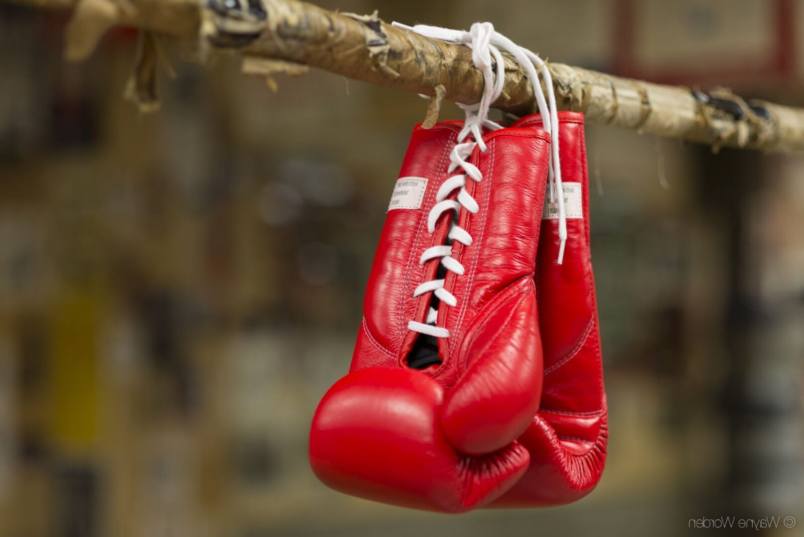 red boxing gloves free download