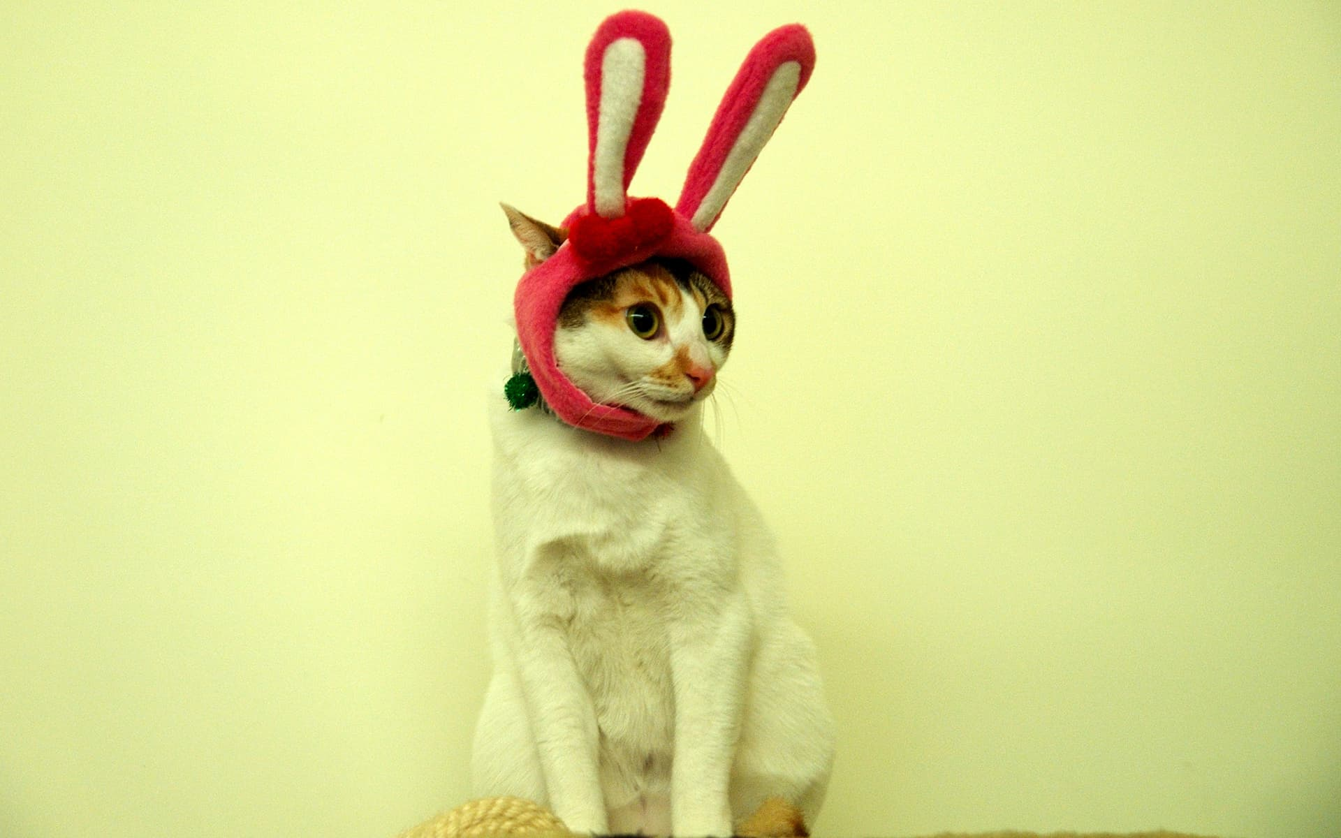 Funny Cat ears free wallpaper
