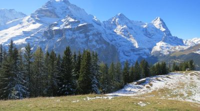 Switzerland - Mountain Jungfrau, forest, trees, beautiful landscape wallpapers