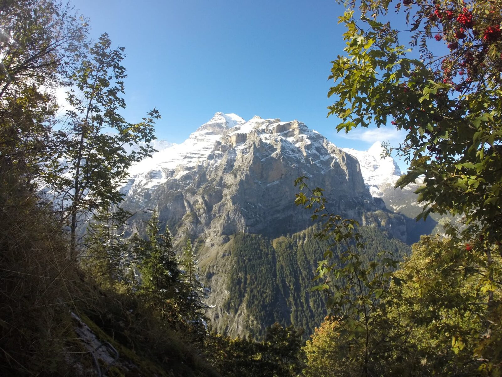 Switzerland - Mountain Jungfrau view from the forest