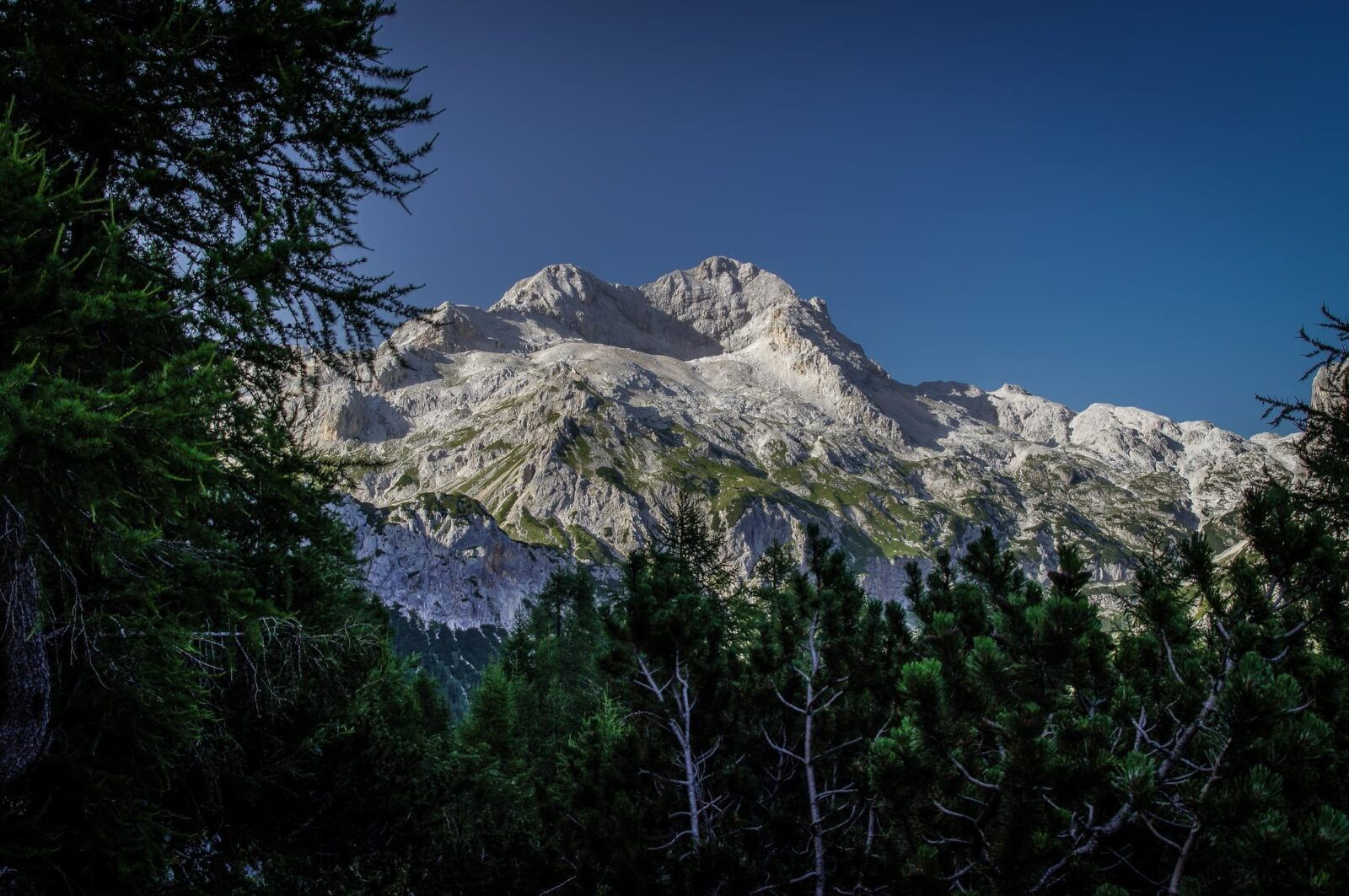 Mountain - Triglav view from forest