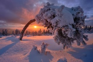 sunrays and snow tree