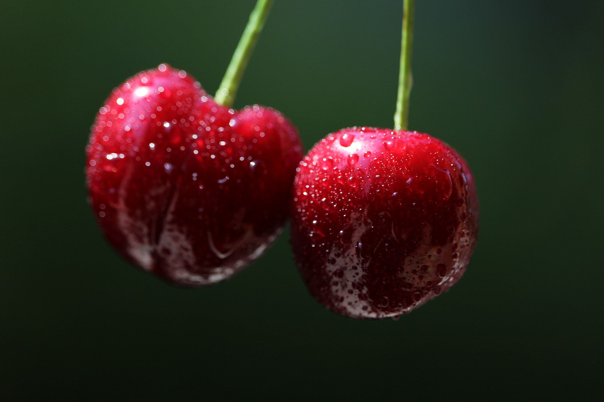 Two cherry with water drops
