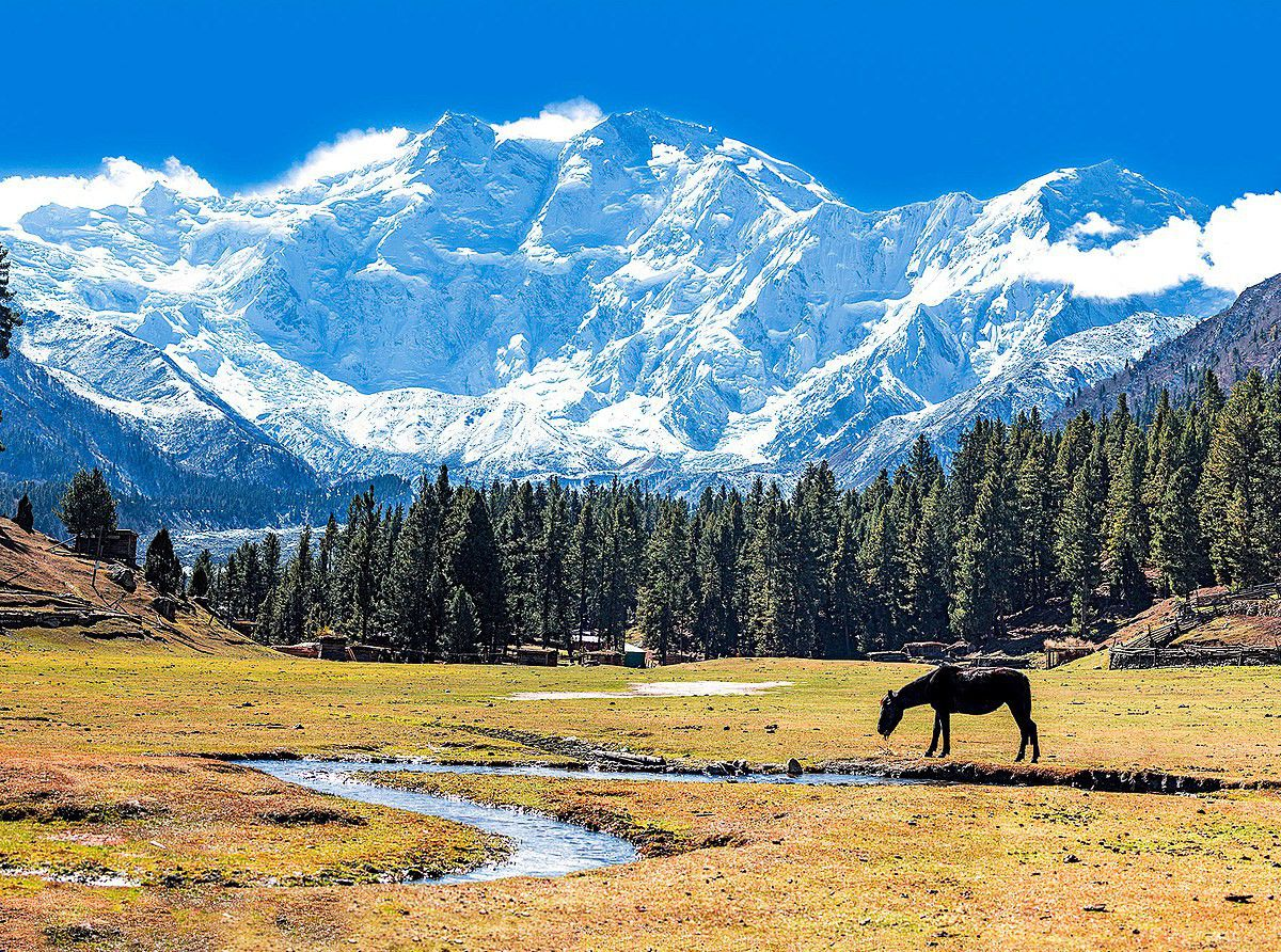 a horse is grazing in a meadow near mount Nanga Parbat