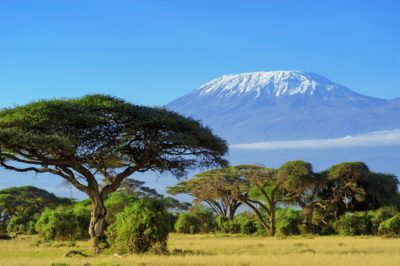 colorful image about large baobab at background Mt Kilimanjaro