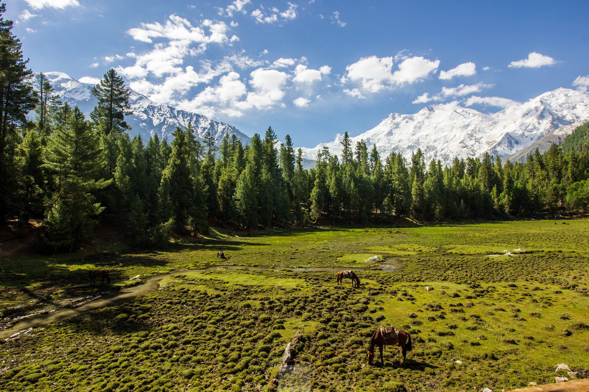 Two horses near the mount Nanga Parbat