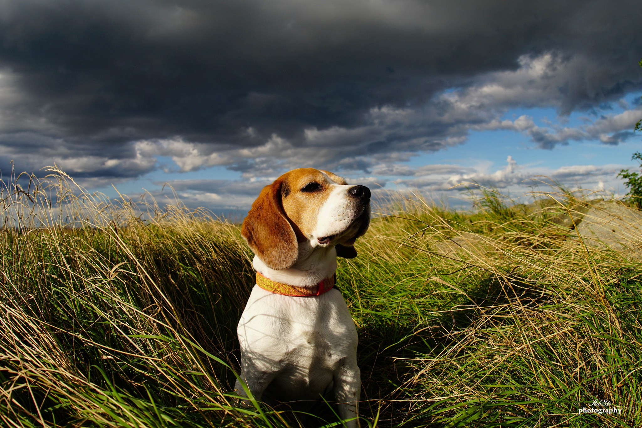 Chester in the field