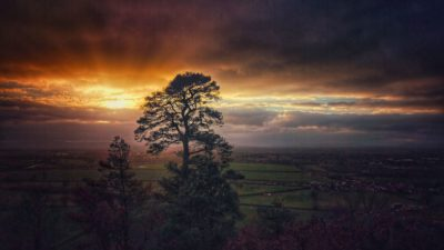 Sunset at Haughmond Hill, A Tree In The Sun, Landscape