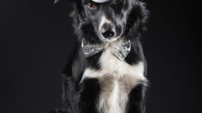 Border collie named Nytar, Black dog, Happy New Year 2019