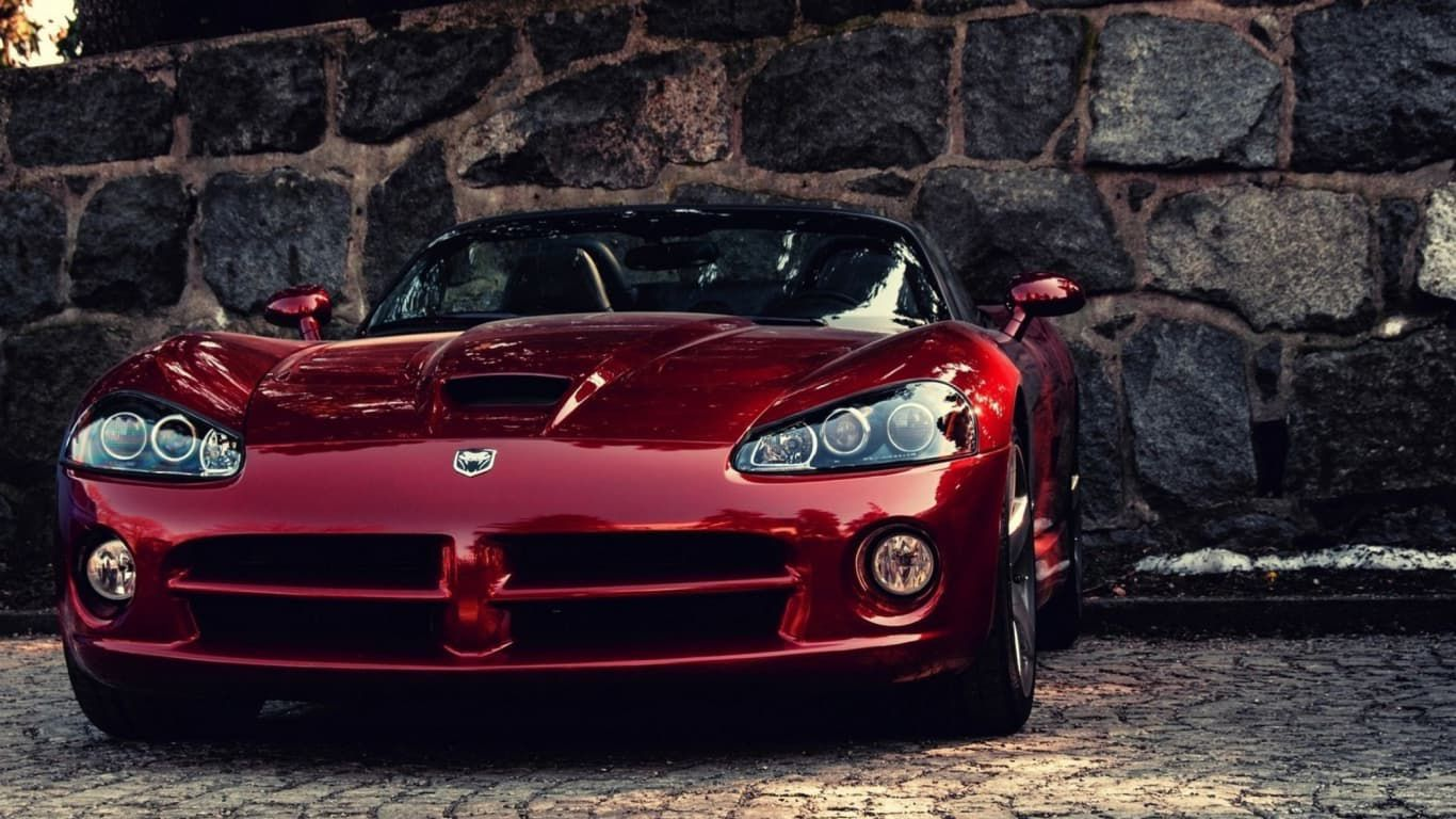 red Viper at stone wall background